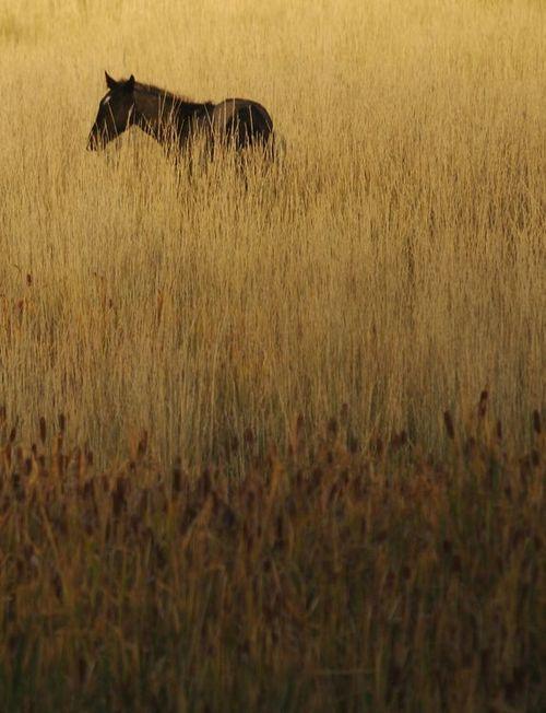 Incredibly beautiful horses for Incredibly beautiful women tumblr