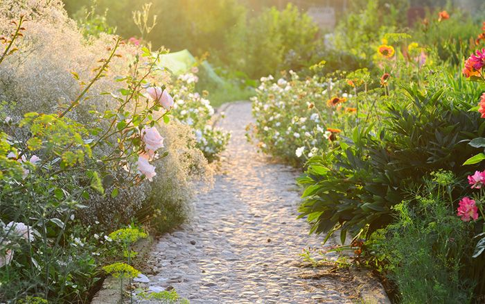 Shelli Jensen/Shutterstock.com   Cottage gardens are having a revival. Annuals and perennials are jostling for attention in riotous borders up and down the country. Plants are spilling over winding paths.  But there's something different about this new wave of cottage gardens. Traditionally, the land around cottages was used