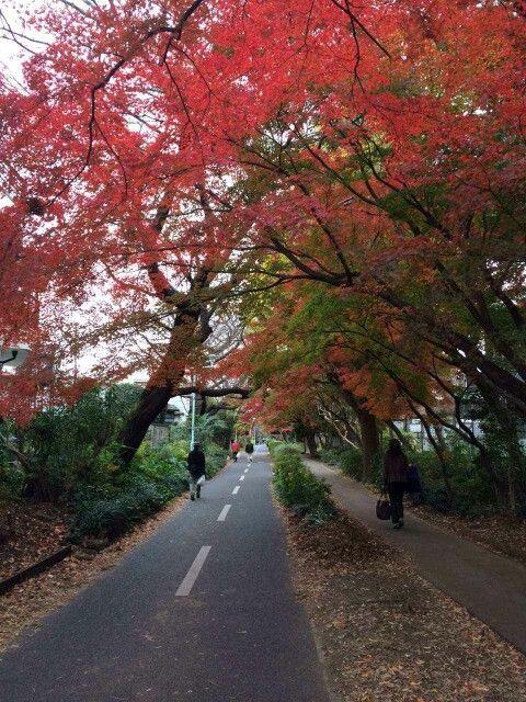 六本木の秋