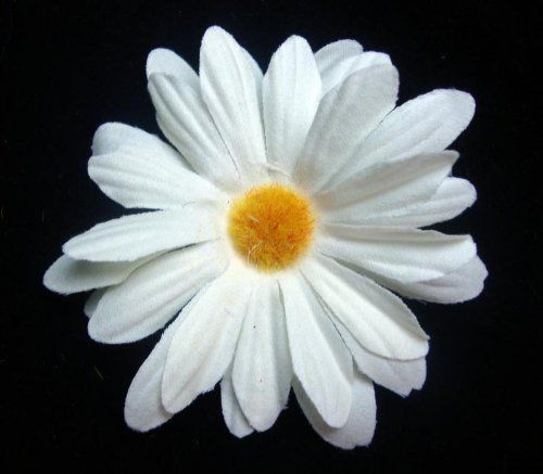 Ivory 3 in. Daisy Hair Flower Clip by hairflowers.net. $3.99. Color. Daisy. Hair Flowers. White-Ivory. Ivory 3 in. Daisy Hair Flower Clip - Ivory daisy Approximately 3 inches wide Alligator clip