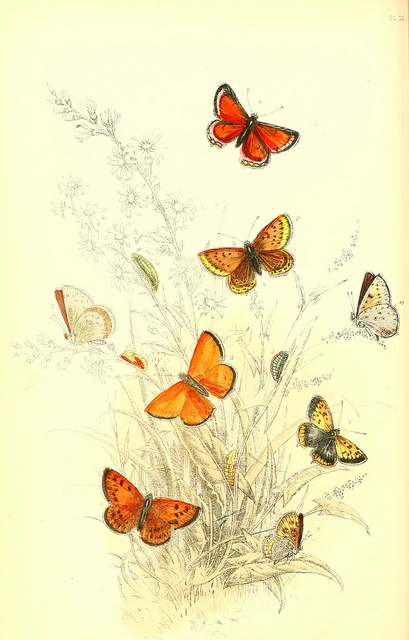 1000 Images About Butterflies Illustrations On Pinterest