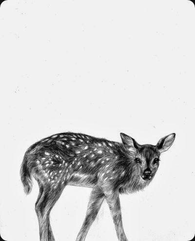 deer by miss talseth illustration