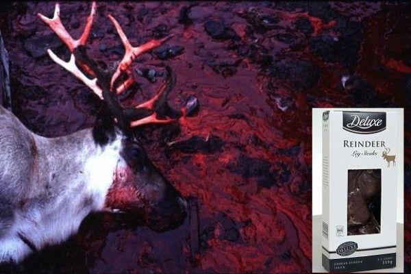 Urge LIDL To Stop Selling Reindeer Meat! | PetitionHub.org