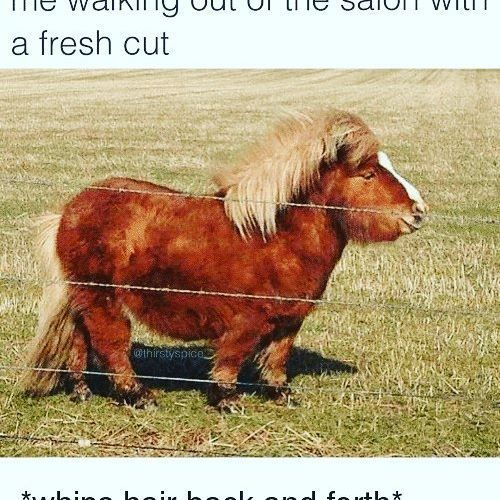 LMAOOO! this was too much!   SO MAJESTIC! lol    #nvenn #bbloggers #memes #beautymemes #hairmemes #yeghair #yychair #salonpro #hairpro