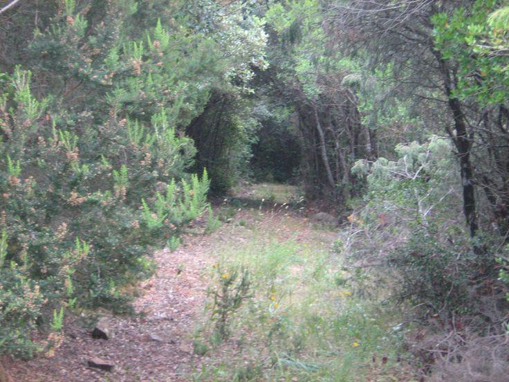 Gallura Sardegna