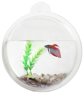 $15 --- Acrylic Fishbowl Wall Mount - modern - pet care - by Danya B