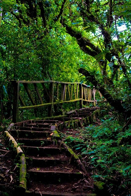 Mombacho Cloud Forest, Nicaragua