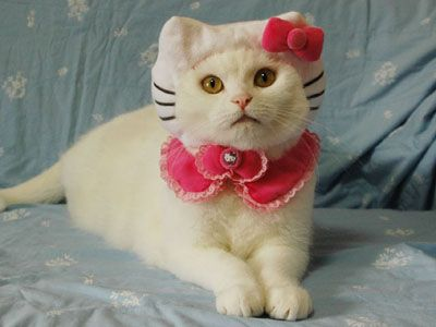 """Real """"Hello Kitty"""" #Funny #Cats #HelloKitty: Cats, Kitty Cat, Real Life, Halloween Costumes, Funny Cat, Cat Costumes, Kitty Kitty, Hellokitti, Hello Kitty"""