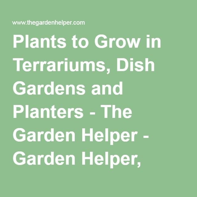 Plants To Grow In Terrariums Dish Gardens And Planters The Garden Helper