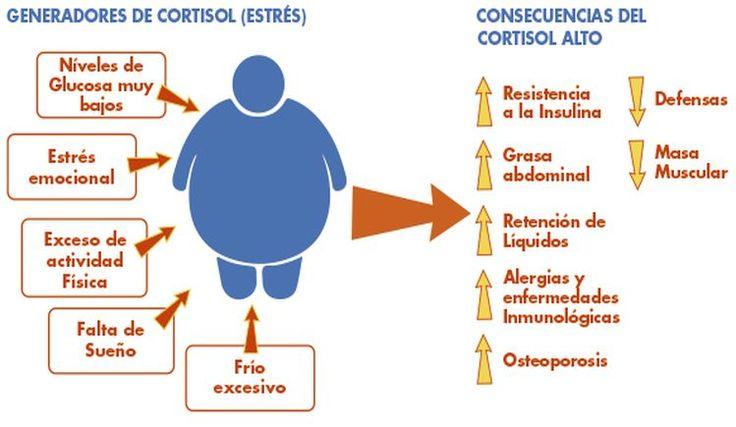 El cortisol es unahormona esteroide que se produce a partir del colesterol en las dos glándulas suprarrenales, situadas en la parte superior de cada riñón.  Normalmente se libera en respuesta a eventos y circunstancias