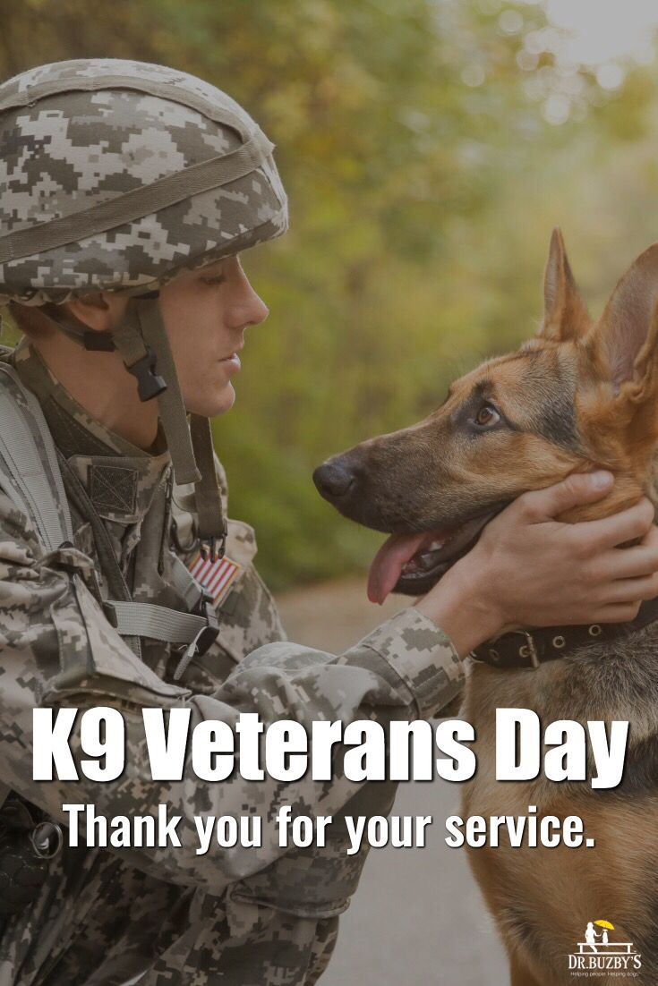 Thank You For Your Service Dog Help Dogs Best Dogs