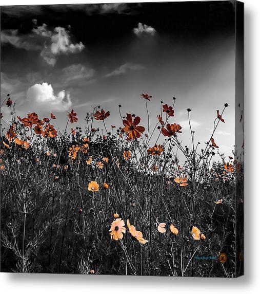 Flordemontis Acrylic Print By Hugo Eloy Tao