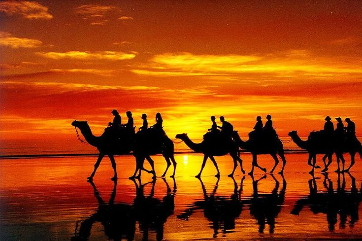 Camel ride at sunset. Henley Beach,  Adelaide, South Australia.