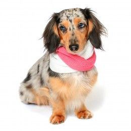 Ruby Rufus Dog Snood - Clothes & Apparel - Dog