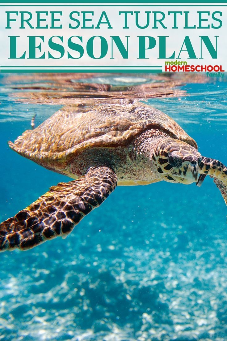 a research on sea turtles Later research determined bocourt's black sea turtle was not genetically distinct  sea turtles return to the beaches on which they were born to lay.