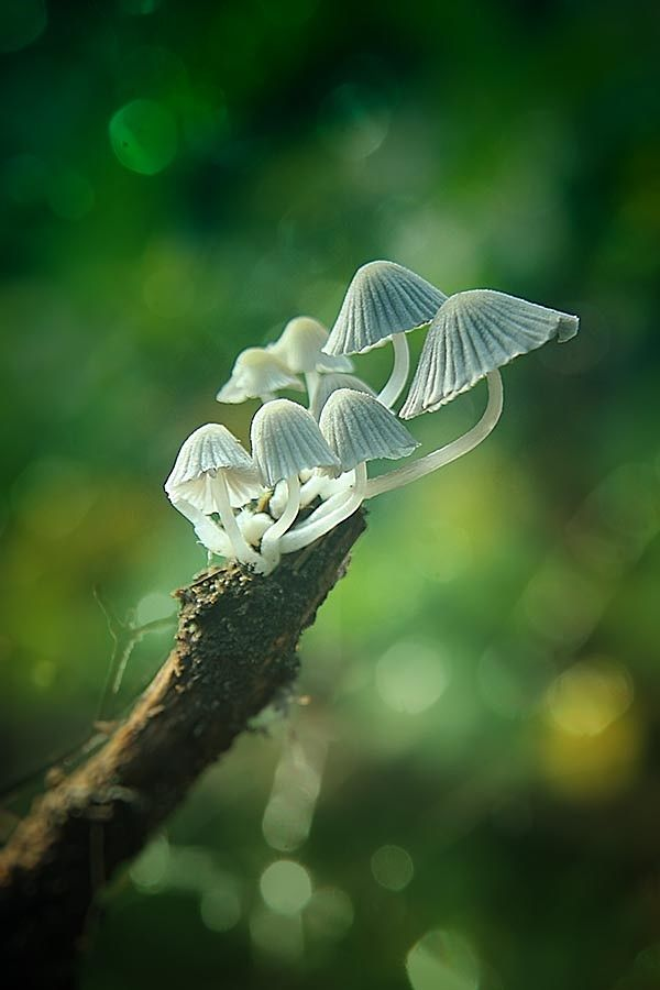 my family by budi 'ccline' on 500px