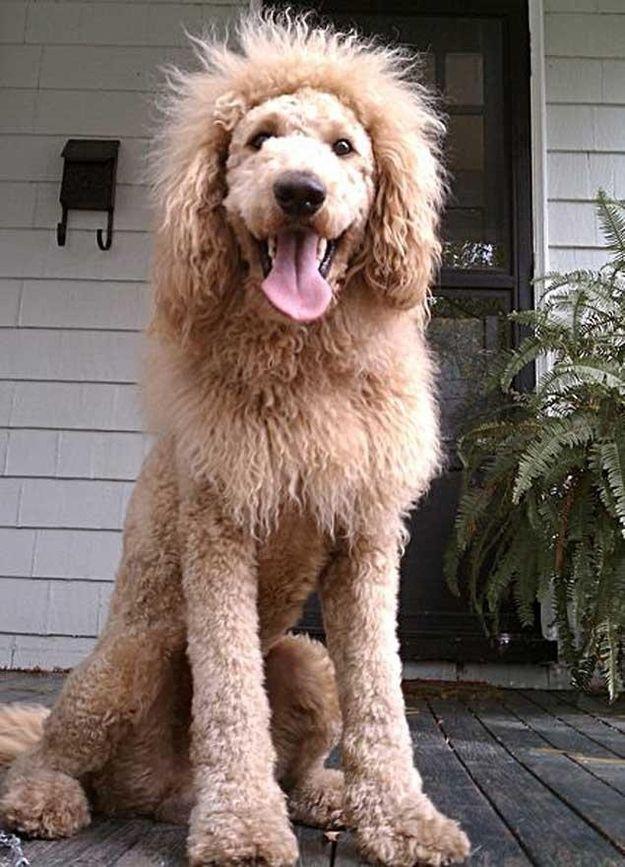 Dog Grooming Norfolk Va