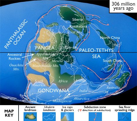 The Carboniferous, 354-290 Million years ago. From -The Paleontology Portal