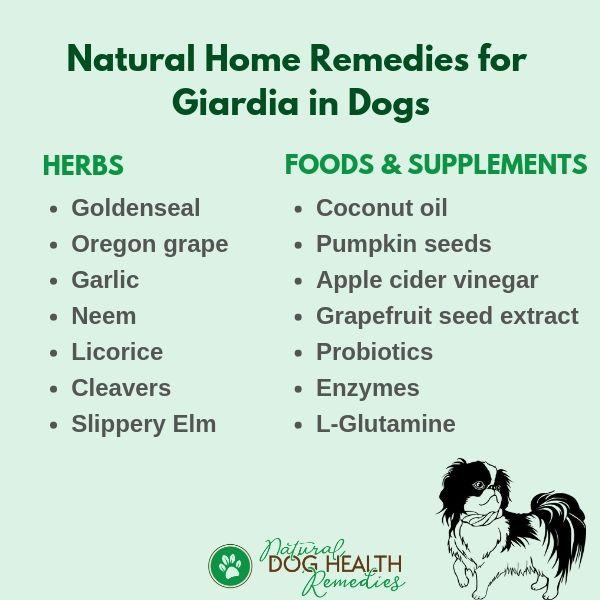 Giardia human treatment natural - Giardia gyorsteszt kutya