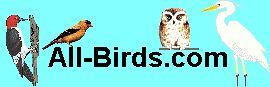 All Birds   Learn how to identify and understand birds at All-Birds. Attract favourites to your backyard with feeders. Identification tips, photographs and pictures, songs and calls, and more