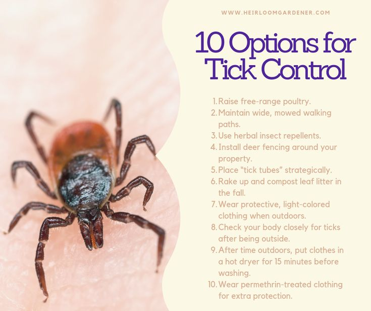 How to Get Rid of Ticks and Prevent Lyme Disease | Pest ...