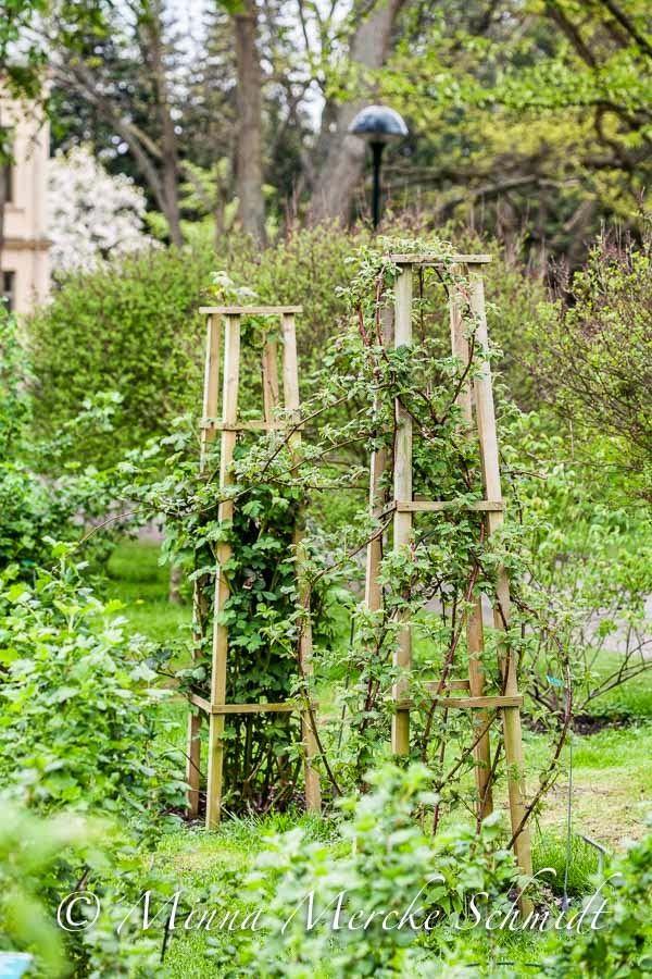 Blomsterverkstad: Dagens trädgårdsplanerings tips