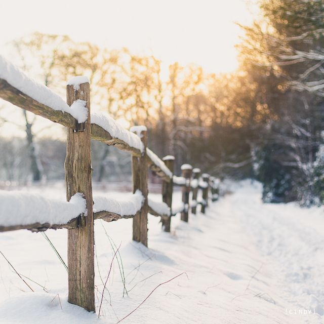 ≡ winter fence