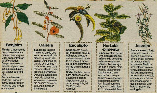 Original espaço: Ervas e plantas mágicas