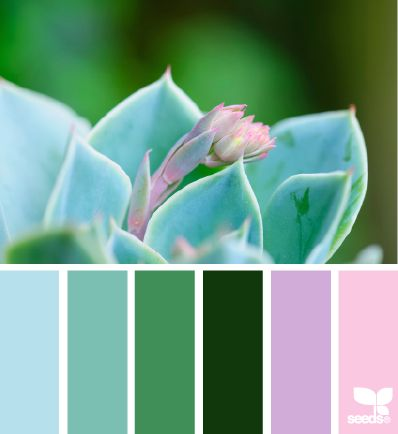 Like the mix between blue green purple and pink. How do people make wedding decisions!!! So many ideas