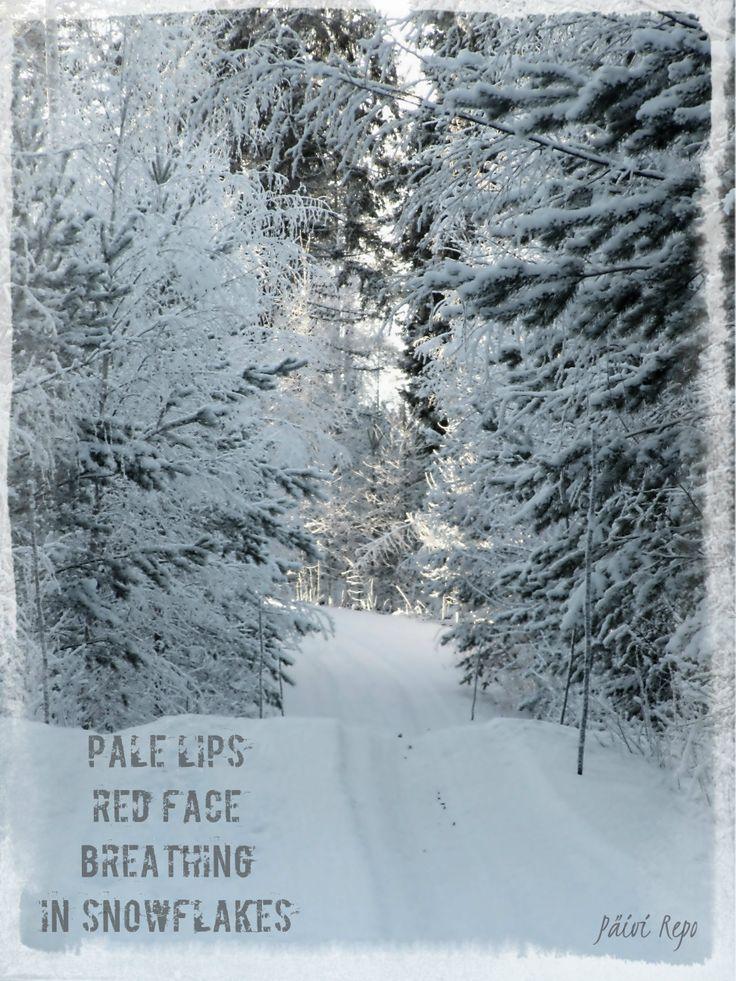 Finnish winter scene - Kuopio / Hiltulanlahti