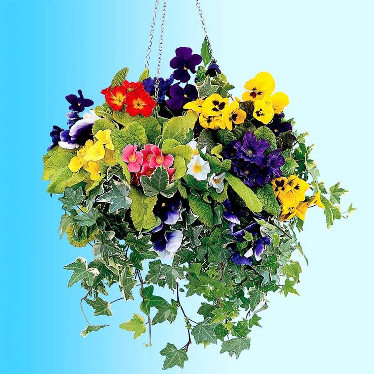 Hanging Flower Basket Maintenance : Best images about house curb appeal on home