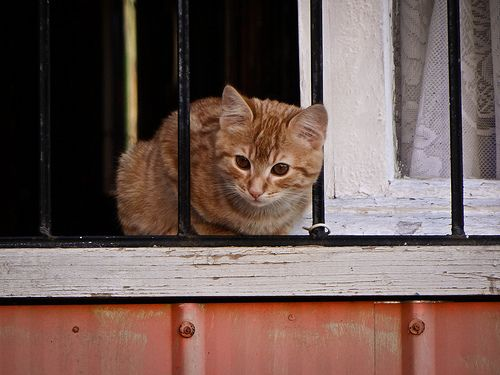 #cat #Chile #Valparaiso #animal #animals #colors