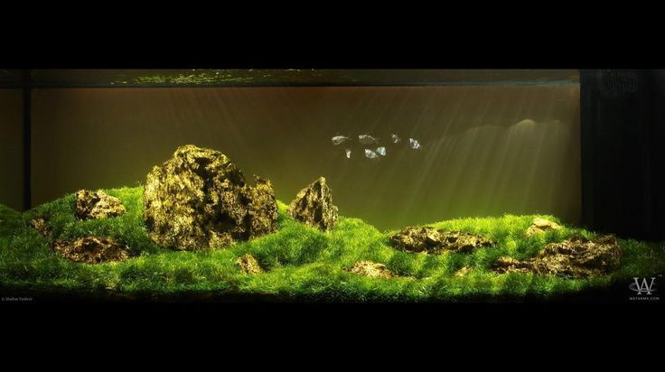 MARKUS TAUBERT For info about this aquascape and to give it a rating click the link in our profile!