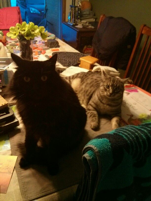 Bad kitty's on the table.