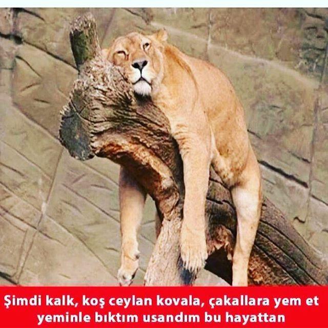 #izmir #ankara #istanbul #komedi #vineturkiye #mizahtürkiye #mizah #eğlence #komeda #russiangirl #komik #komedia #eglence #vineturkey #izdivaç #medya #vinetage #klip #sayko #komedya #funny #eglenceli #süper #vineburda #paylasimplatformu #troller #like4like #vinetr #aleynatilki #liseli http://turkrazzi.com/ipost/1523093762074363917/?code=BUjHbT4DkgN