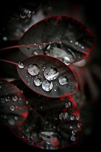 Water On Black Leaves