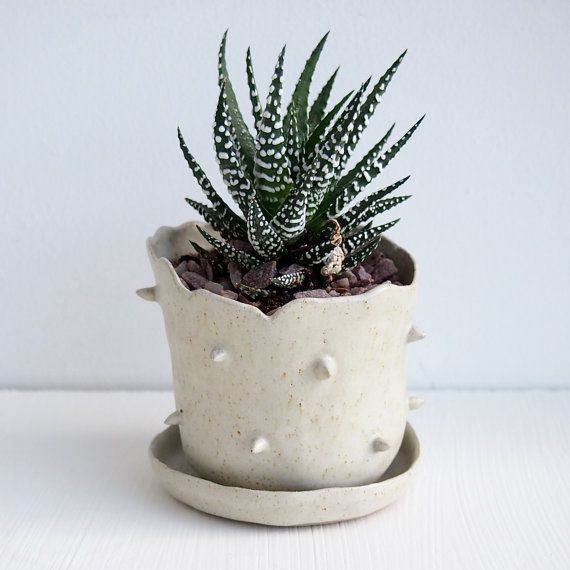 Handmade small chunky stoneware ceramic spiky planter pots.  *Made from brown stoneware clay glazed with satin white glaze , the effect is speckly