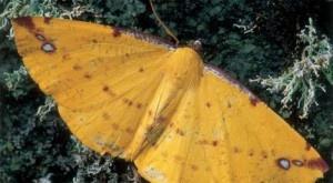 Un equipo de científicos franceses ha creado un detector de explosivos que mejora notablemente la sensibilidad de los existentes basado en el modo de funcionamiento de las antenas de una especie de mariposas nocturnas, informó hoy el Centro Nacional de Investigación Científica galo (CNRS). + info: http://www.ecoapuntes.com.ar/2012/06/las-antenas-de-las-mariposas-inspiran-un-potente-detector-de-explosivos/