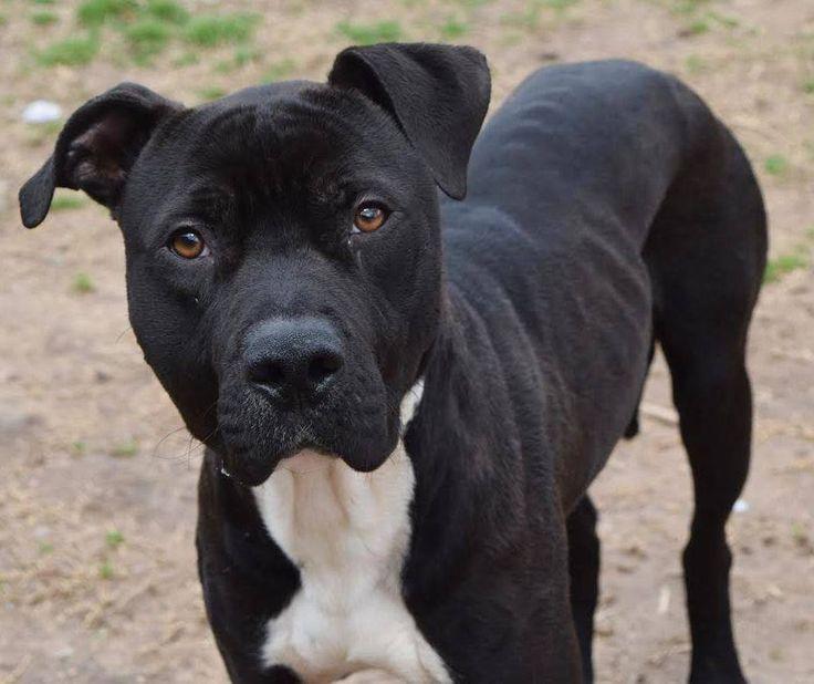 Urgent Animals at Fulton County Animal Services Atlanta