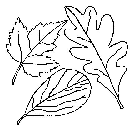 Best 25 Leaf coloring ideas on Pinterest  Leaf coloring page