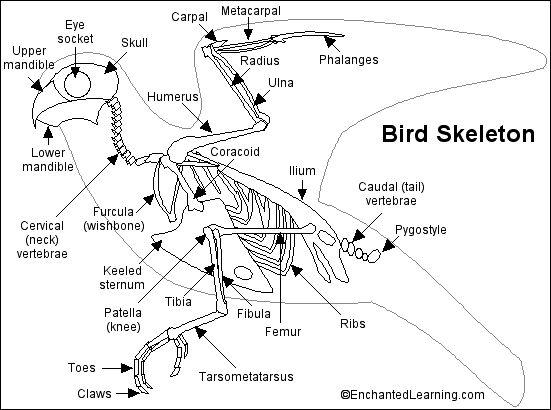 Pin on KONOS 1 AT: Birds (Science)