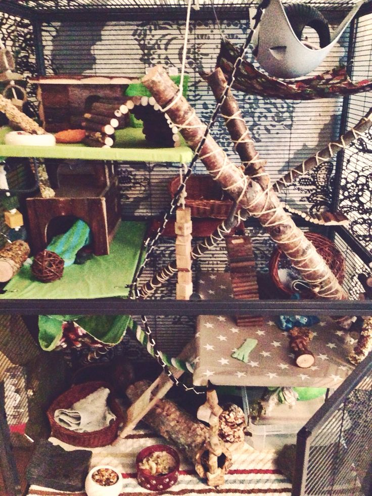 So cool! A rat cage, but I love people who take their pets seriously! :D <3