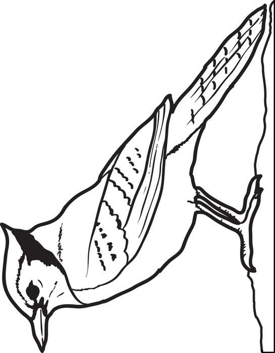 coloring pages jayjay - photo#31