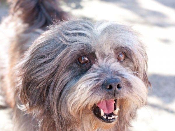 Ständiges Bellen beim Hund: Jetzt ist ein wenig Training gefragt — Bild: Shutterstock / johannviloria