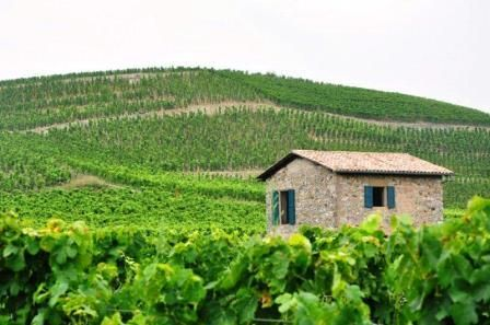 Rhone Wine Guide Everything you need to know about Hermitage Wine