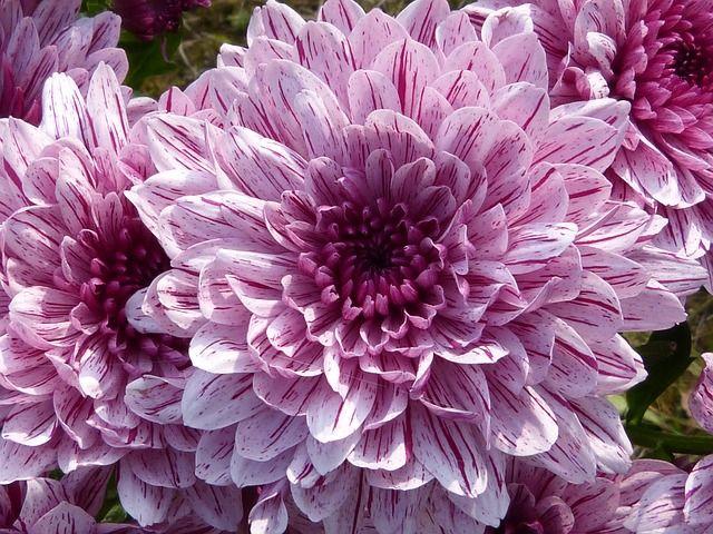 205 besten ✿ Flowers and Gardens✿ Bilder auf Pinterest | Blumen ...