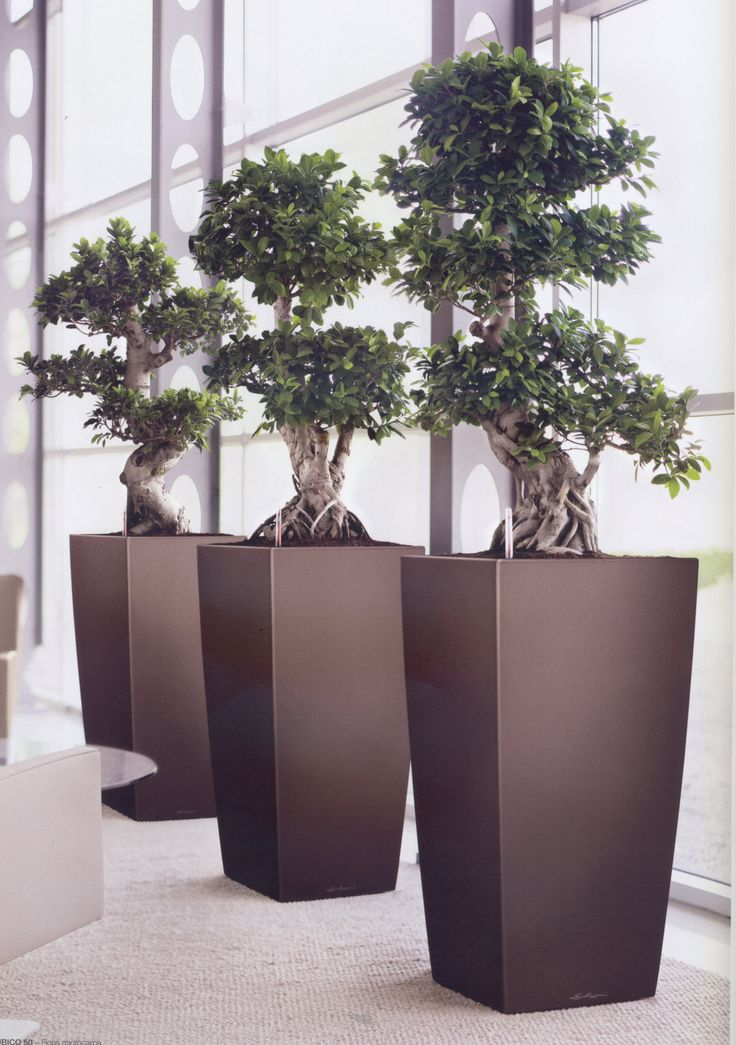 office bonsai tree. Delighful Bonsai Office Bonsai Tree Office This Atrium Has A Striking And  Bonsai Tree E In