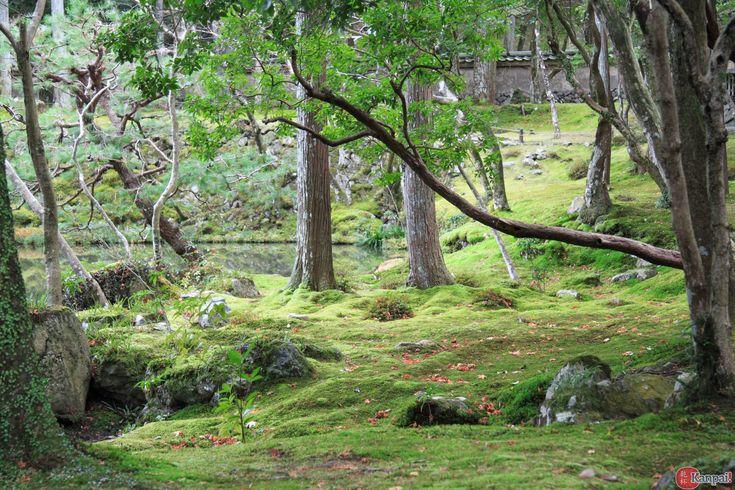 Le temple des mousses n'est pas la moins connue des visites de Kyoto, mais compte tenu de la relative difficulté à s'y rendre, peu sont les visiteurs occidentaux dans l'ancienne capitale japonaise à en fouler le sol....