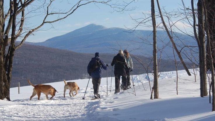En route pour de belles aventures maîtres et chiens !