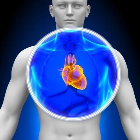 A legjobb artéria tisztító szuper táplálékok | Szív- és érrendszer…